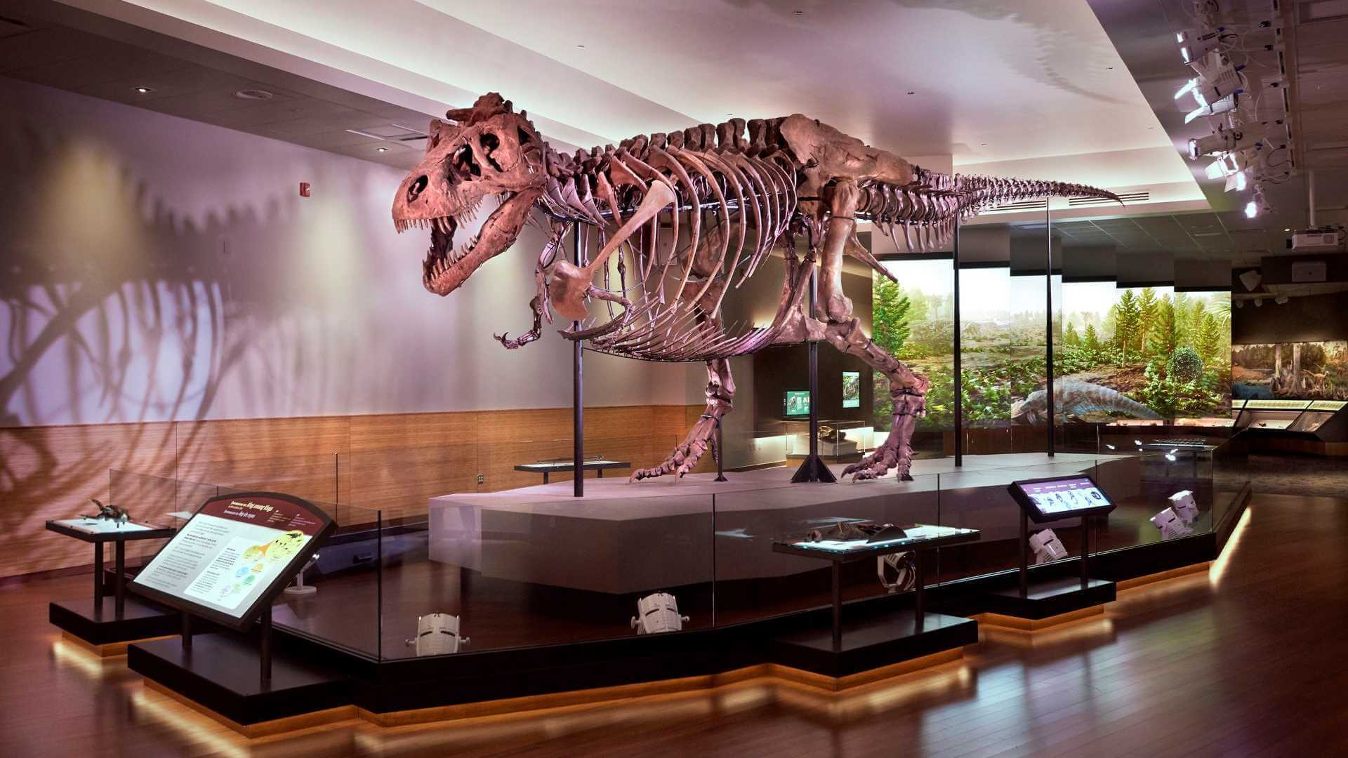 Image for SUE: The T. rex Experience