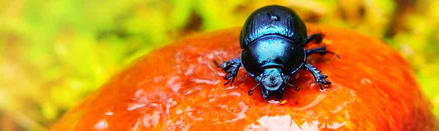 Banner image for Beetle Portraits: Form, Texture, and Iridescence