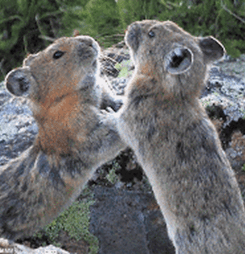 Banner image for Animal Interactions - Pikas & their Predators